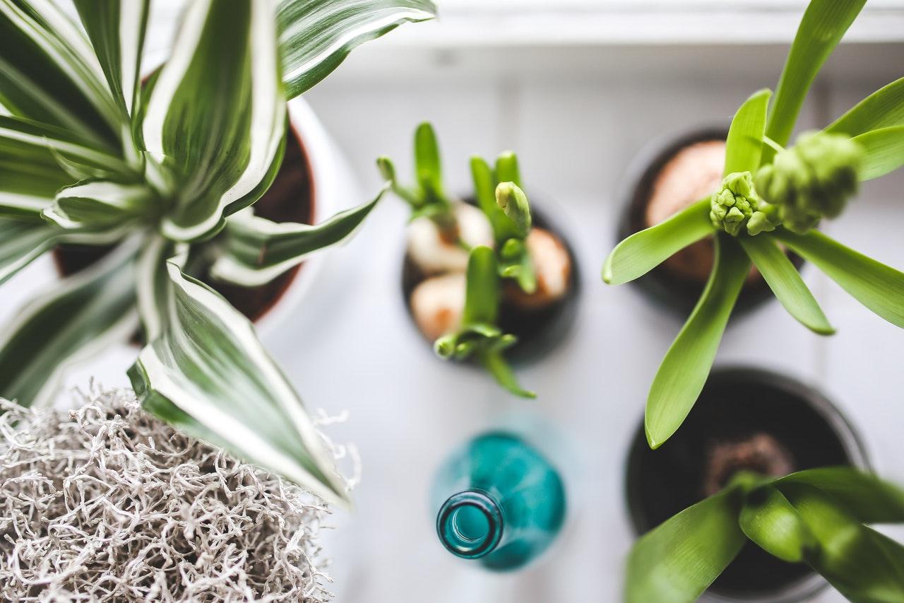 Pflanzen für innen und außen – Nimmervoll … Ihr Fachmarkt ...